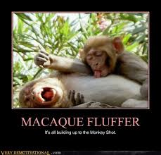 Funny Monkey Meme - memebase macaque all your memes are belong to us funny memes