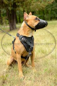 belgian malinois vest multifunctional leather dog harness with padded breast plate h1