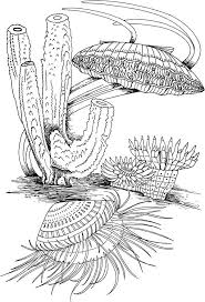 free printable sea life coloring pages clam shell and marine life coloring page download u0026 print online