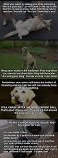 271 best dogs images on pinterest baby animals beautiful words