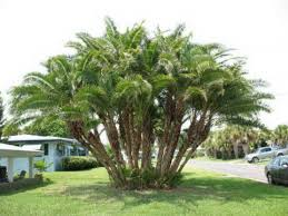 Backyard Trees Landscaping Ideas Backyard Trees Privacy Backyard And Yard Design For Village