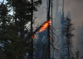 Alaska Wildfire Climate Change by The Mcmurray Fire Is Worse Because Of Climate Change And We Need