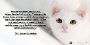 hukum memandulkan kucing kebenaran islam mengenai kucing sejak 1500 tahun yang lalu