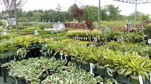 family garden center rewards seoane landscaping
