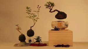perhaps your home is ready for a floating bonsai aleph