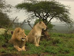 wild animals images A brief guide to wild animals in south africa south africa jpg