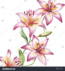 vector lily flowers stock vector 234918838 shutterstock