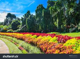multicolored alley flowers trees royal botanic stock photo