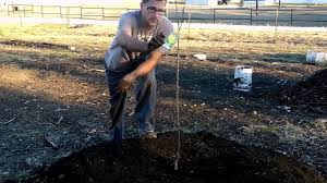 how i planted bareroot fruit trees in the orchard youtube