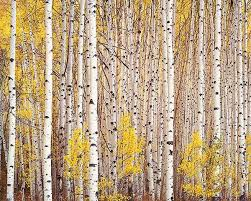 12 best trees images on tree artist and artists