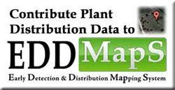 edd maps invasive plant atlas of the united states database of plants