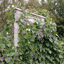 Rustic Trellis Panels Trellises And Vine Supports Window Frames Window And Doors