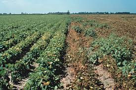 Diseases Caused By Protozoa In Plants - plant disease management