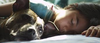 a u0026 her dog learn a lesson in culpability in nick singer u0027s