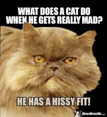 Mad Kitty Meme - funny cat riddles corny kitty jokes catty q a humor pg 7