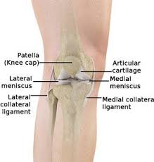 Knee Bony Anatomy Knee Surgery Austin Knee Arthroscopy Round Rock Knee Pain