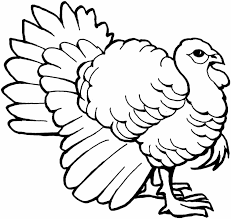 drawing of a turkey thanksgiving math worksheet coloring pages