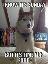 Siberian Husky Meme - i found reba adopted on husky dog siberian huskies and dog