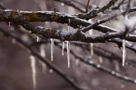 icicles on tree branches stock image image of 72750965