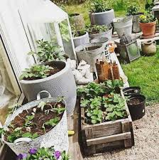 how to start a container vegetable garden basic tips ugr