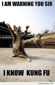 Kung Fu Meme - kung fu cat by ben meme center