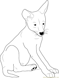 coyote coloring pages printable coloring pages of coyotes