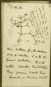 the genealogical of phylogenetic networks charles darwin s