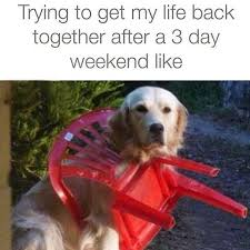 Weekend Dog Meme - 13 memes you should send your co workers after a long weekend