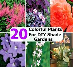 Gardening Zones Uk - plants for shade nz plants for shady areas zone 6 chic design