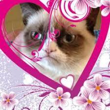 Meme Generator Grumpy Cat - grumpy cat valentines day meme generator