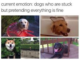 Dogs Memes - this is fine dogs know your meme