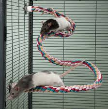 Best Bedding For Rats 21 Best Nifty Rat Cages And Toys Images On Pinterest Pet Rats