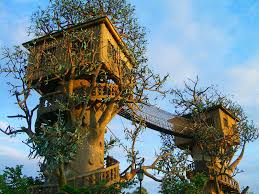 inspiring tree house plans and designs with sturdy wooden