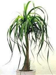 plante verte dans une chambre plante verte dans une chambre idées décoration intérieure
