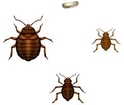 What Causes Bed Bugs To Come How Do You Know If You U0027ve Been Bitten By Bed Bugs