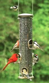Backyard Wild Birds Backyard Wild Birding Supplies Aspects Antique Brass Quick Clean