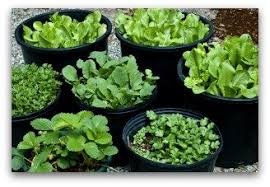 What To Plant In Spring Vegetable Garden by Best Time Plant Vegetable Garden When To Plant A Vegetable Garden