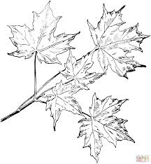 oak and maple leaves coloring page free printable coloring pages