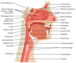 Anatomy Human Abdomen Human Stomach Muscle Anatomy Anatomy Chart Body