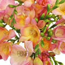 freesia flower pink freesia flower