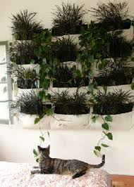 behind the curtains living walls green gardening indoors
