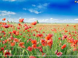 flowers 156h jpg