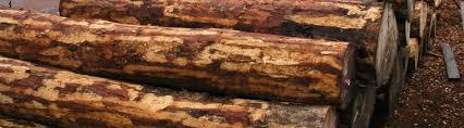 wood images fsc controlled wood fsc international