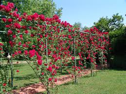 Pvc Pipe Trellis 27 Garden Trellis And Lattice Ideas Wood U0026 Metal