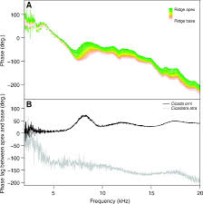 sexual dimorphism in auditory mechanics tympanal vibrations of