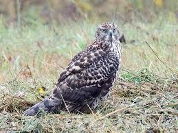 New york state expands popular grassland bird area ncpr news