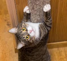 comment fabriquer un arbre a chat comment protéger ses murs des griffes du chat