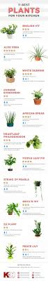 plants for on top of kitchen cabinets the 11 best plants for your kitchen top kitchen houseplants