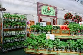 vegetable garden at home mybktouch com