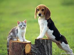 Wallpaper Dog The Dog In World Beagle Dogs Beagle Pinterest Beagle Dog